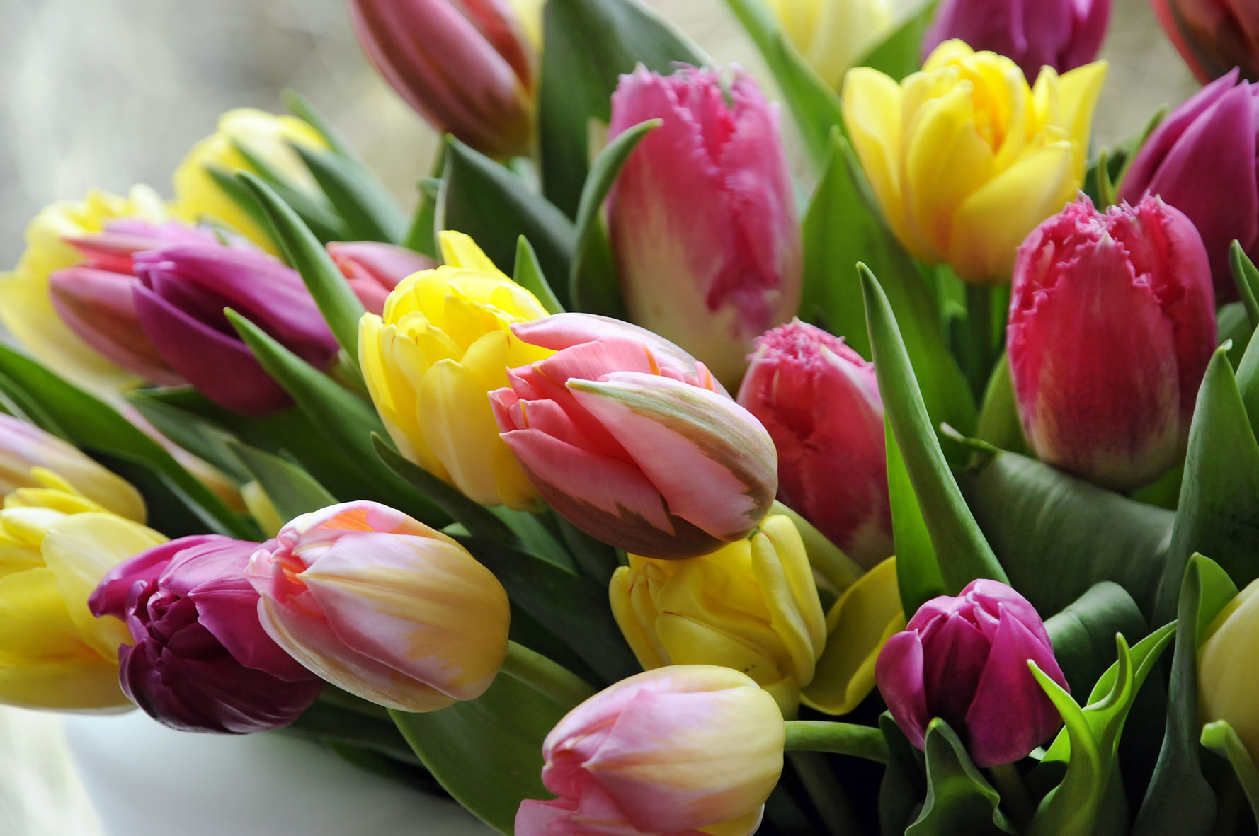 Купить цветы на 8 марта фотографии красивые